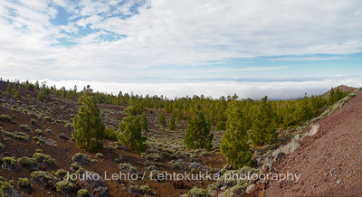 Teide National Park nr 131, with Canary pines