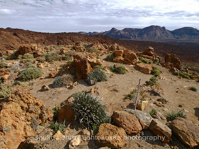 Teide National Park nr 088