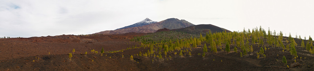 Teide National Park nr 136, with Canary pines
