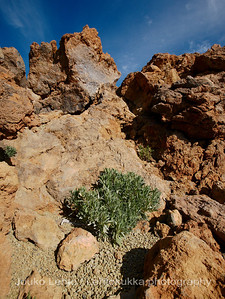 Teide National Park nr 117
