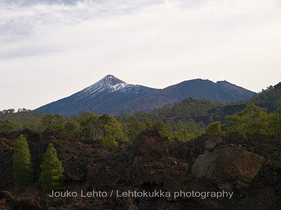 Teide National Park nr 009, with Canary pines