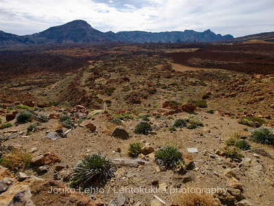 Teide National Park nr 089
