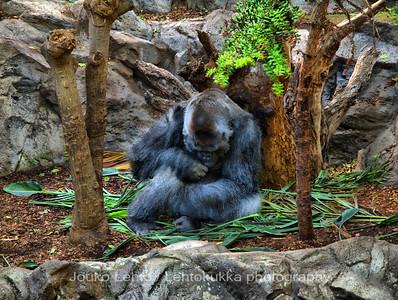 The Gorilla v2