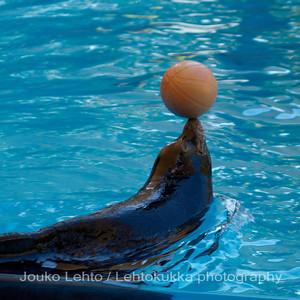 The Sea Lion Show