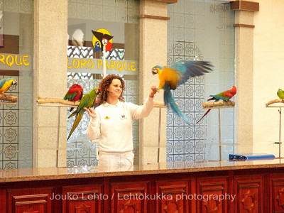 The Parrot Show