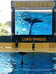 The Orca Show