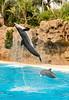 Dolphins, Loro Parque