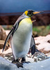 Emperor Penguins, Loro Parque