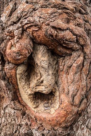 The 'Wishing Tree'