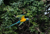 Parrot, Loro Parque