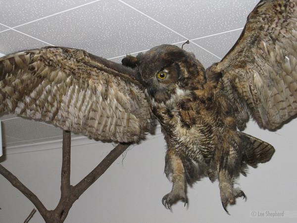 Creepy owl!