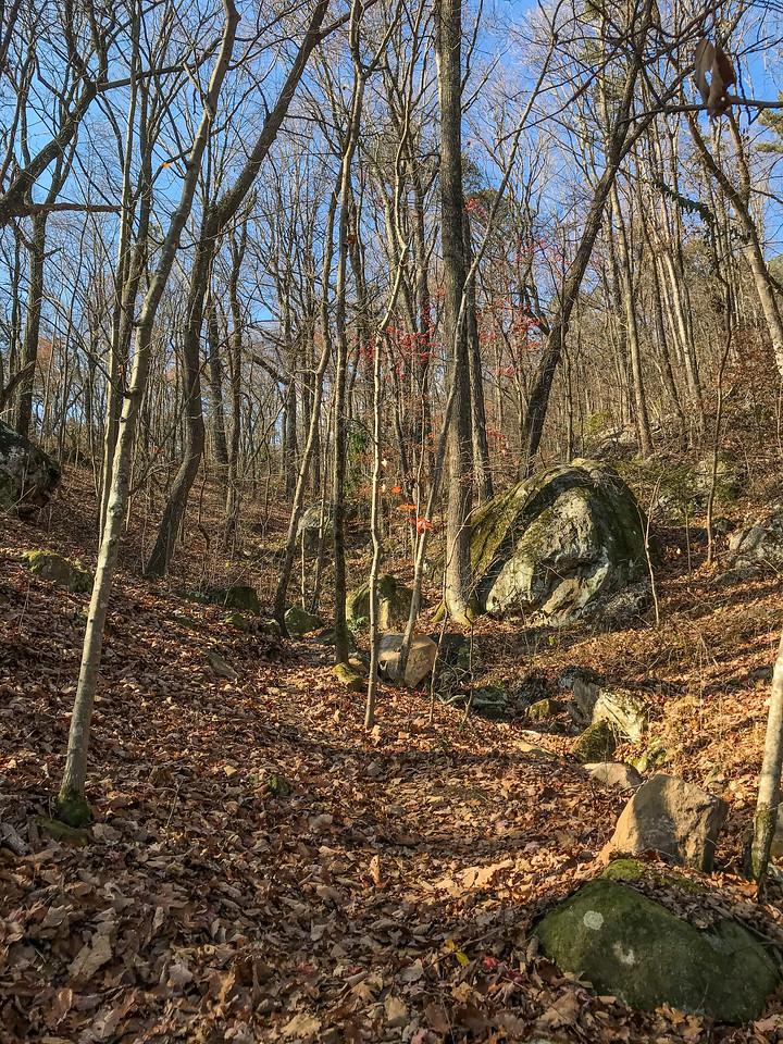 Trail through woods.