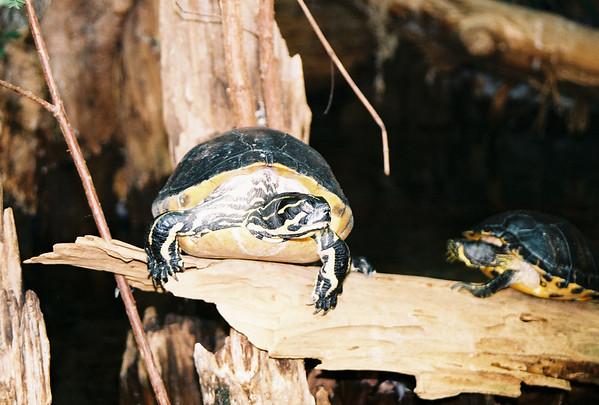 2006 - Tennessee Aquarium