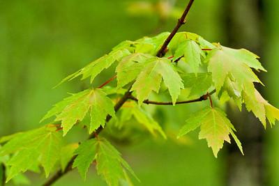 6894 Leaves