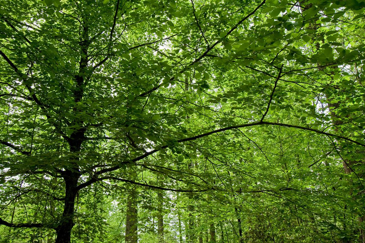 At UT Arboretum, Oak Ridge, TN