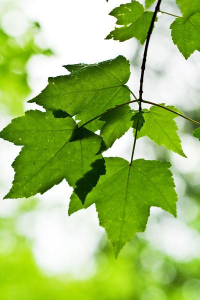 6815 Leaves 2