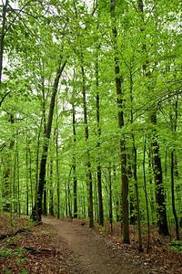 Forest at UT Arboretum