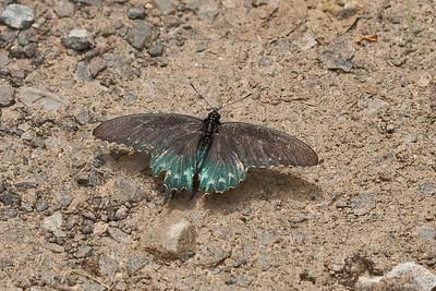 7224 Butterfly