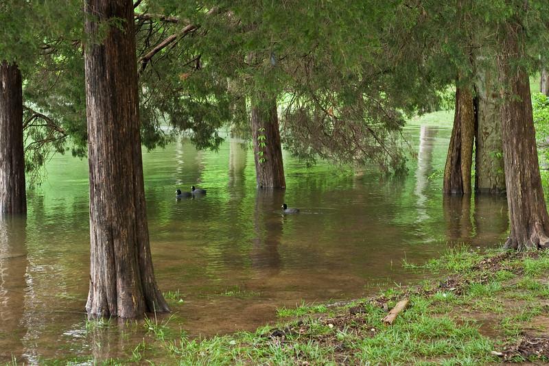8723 Flooded Reservoir