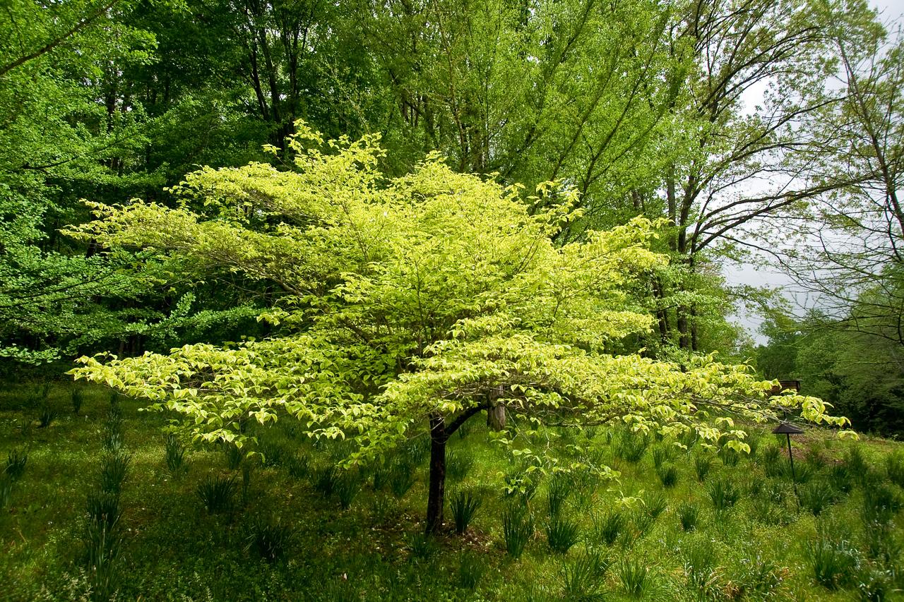 6761 Yellow Green Tree
