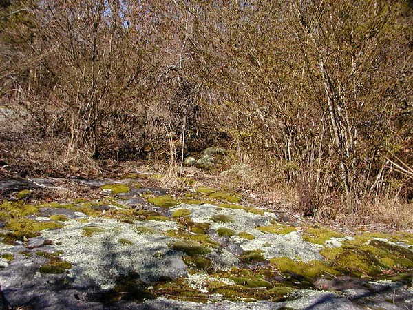 Reindeer moss and lichens adorn the stone surface around the brink of Ozone Falls.
