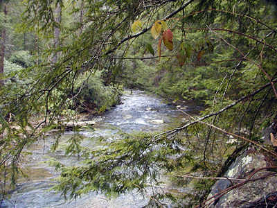 Hemlock boughs over Turtletown Creek<br /> Turtletown Scenic Area, TN