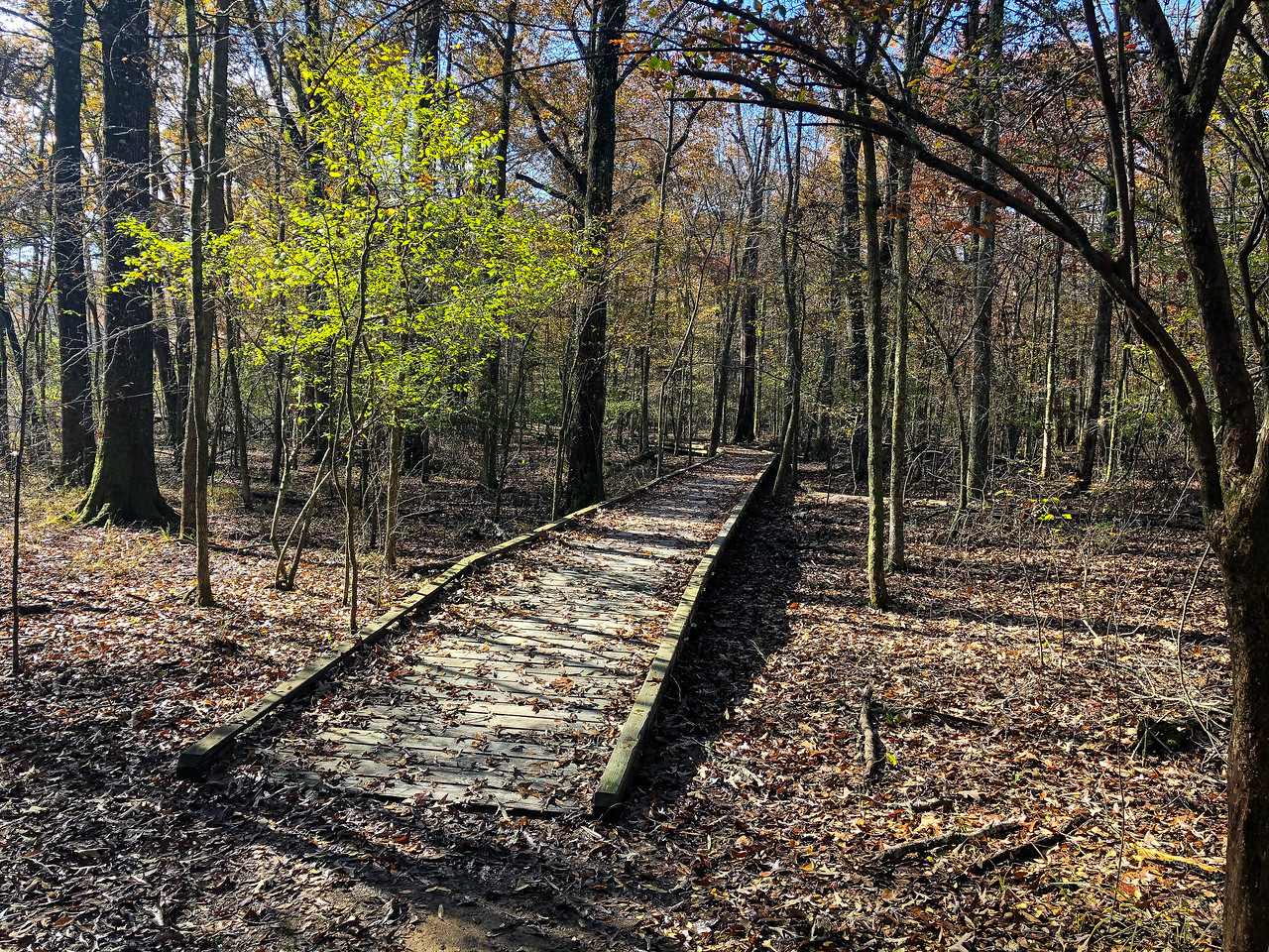 A boardwalk over a wet area in the woods.