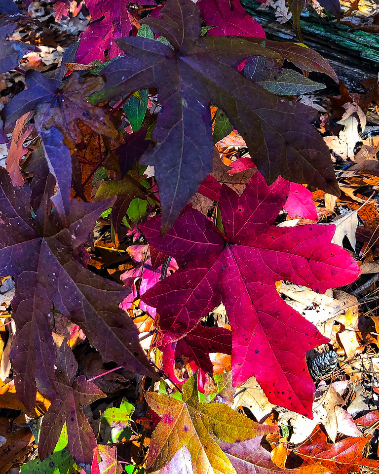 Colorful fall leaves on the ground.