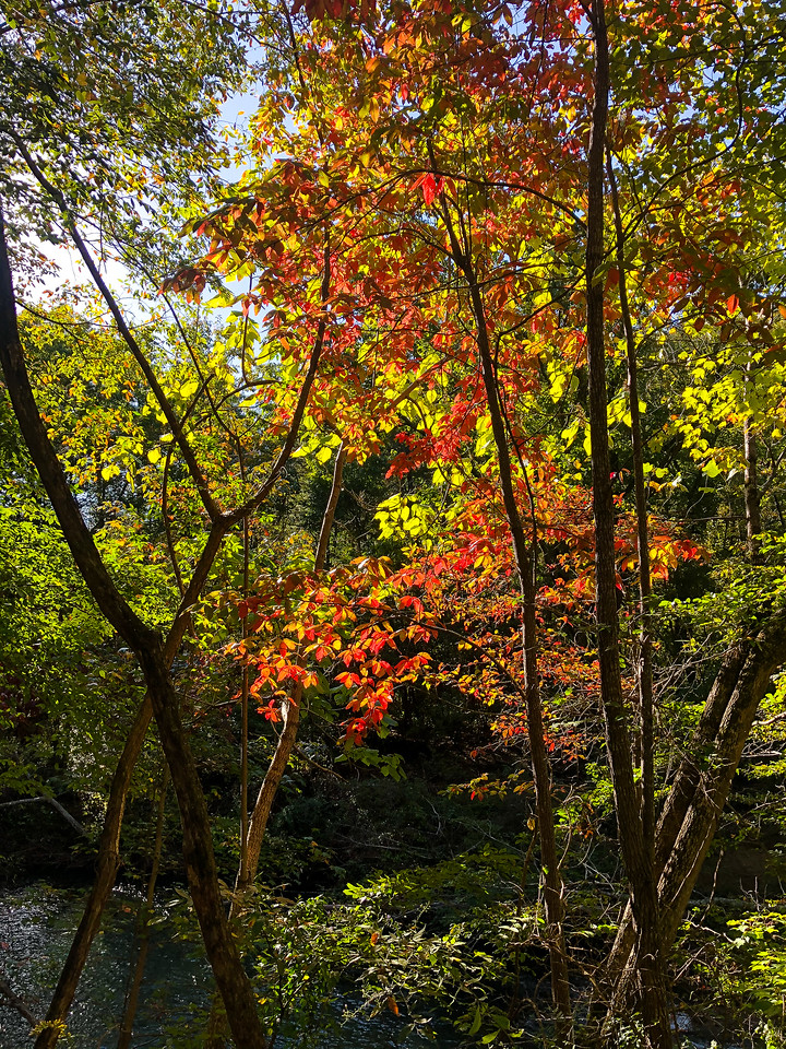 Fall colored trees.
