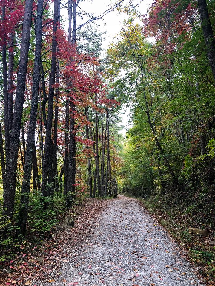 Gravel path through the woods.