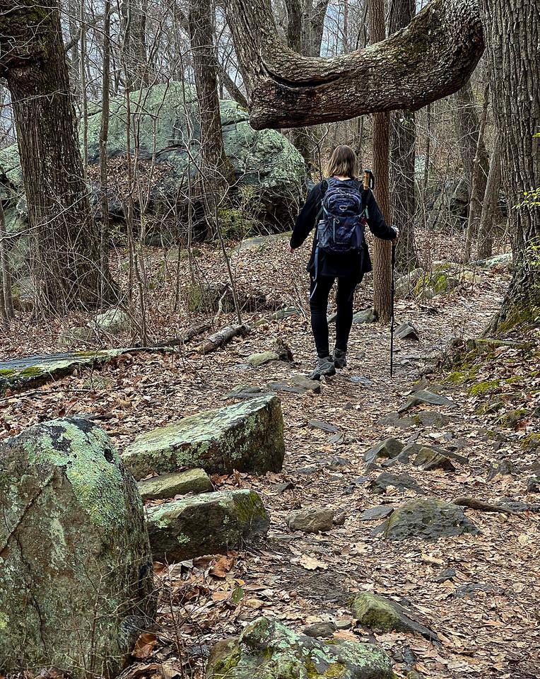 A hiker on the trail walks under a large tree limb.