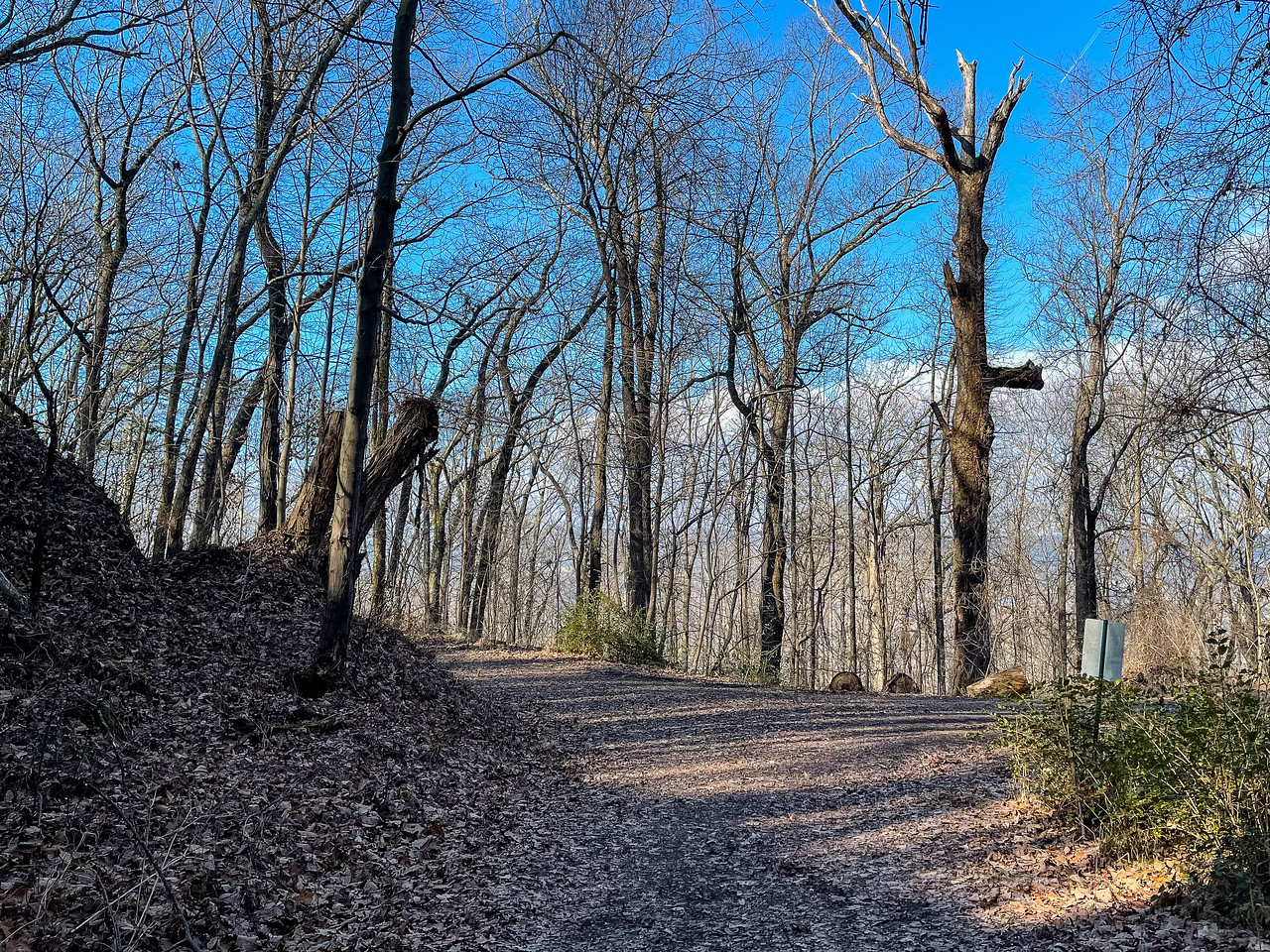 An intersection of two wide trails in the forest.