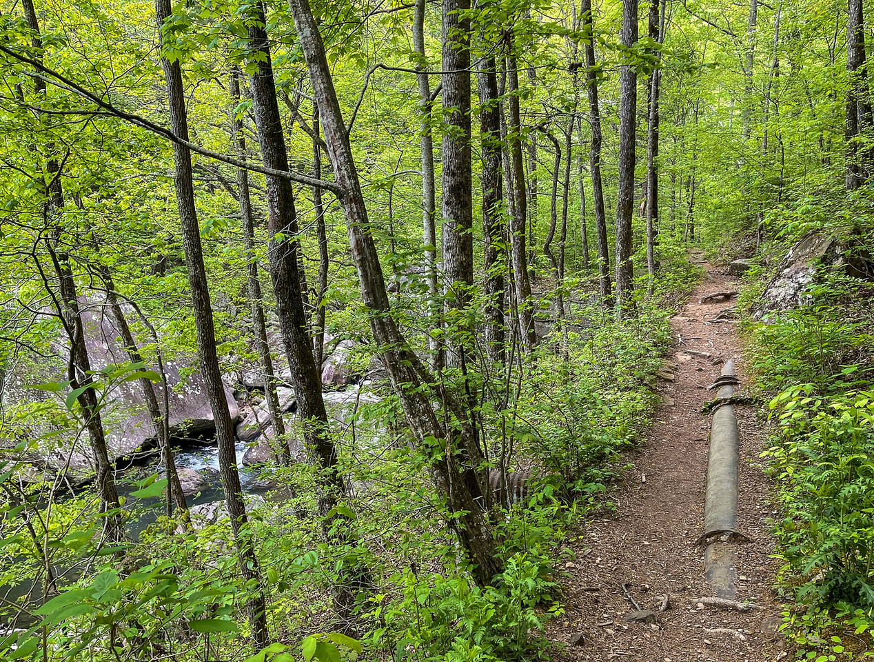 The trail with the creek on the left.