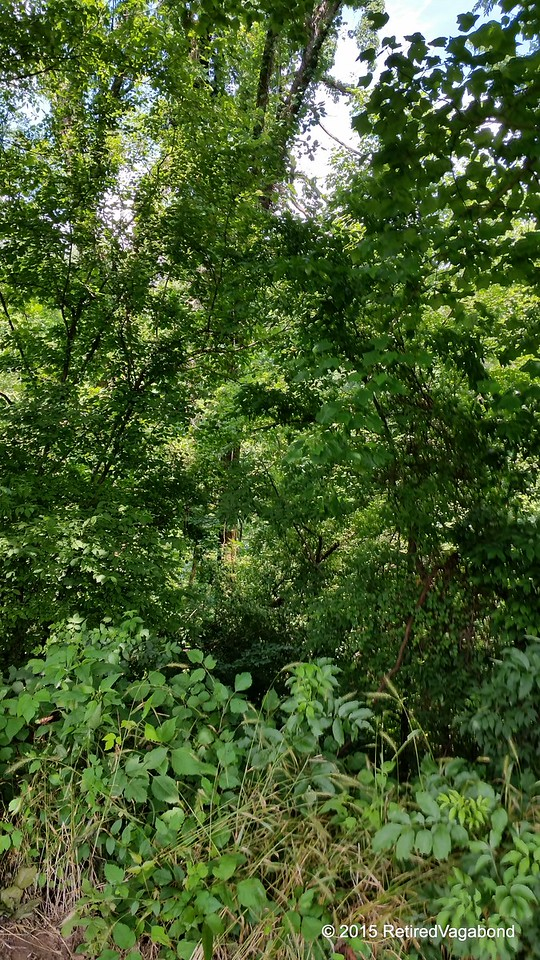 Thick Vegetation Everywhere