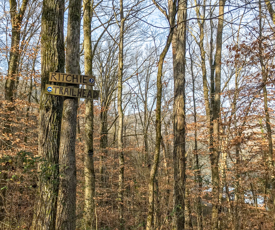A wooden sign on a tree with an arrow pointing to the trailhead.
