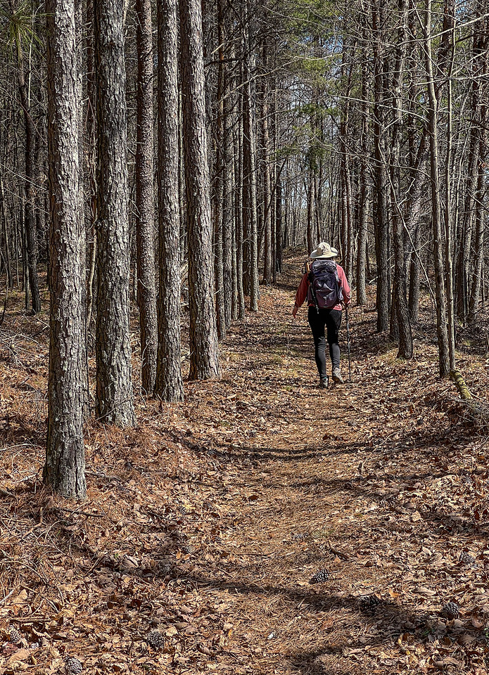 A woman hikes through a a pine forest.