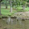 Steele Creek Park Tree Trail - Bristol, TN