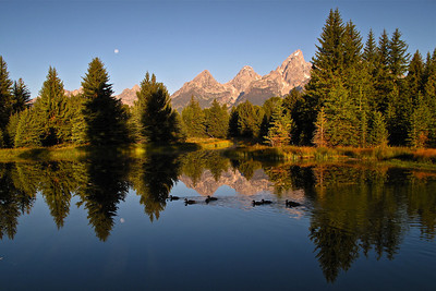 Schwabacher Landing, Grand Teton NP.  Took this image 7:30 am mountain time, on the first day of Art Wolfe's Workshop.  The almost full moon was setting and the ducks came by at the correct moment.