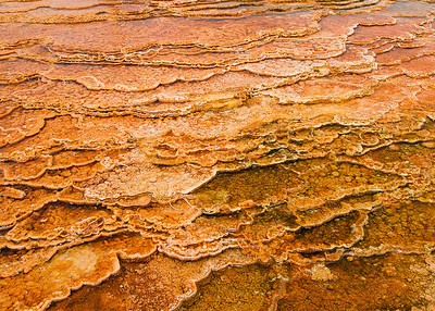 Bacterial mat