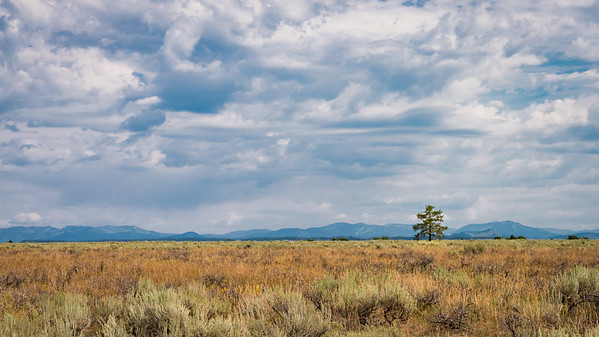 The Grand Teton National Park - Lonely Tree