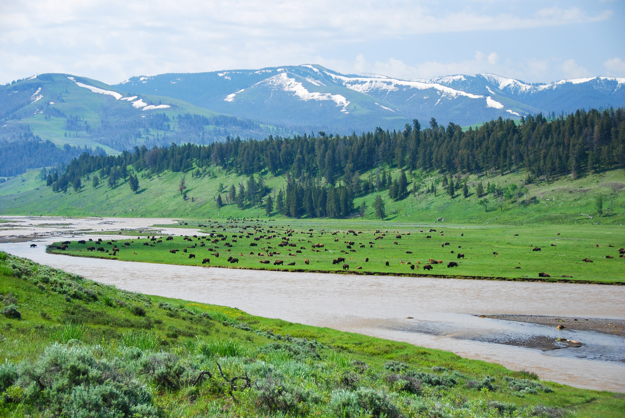 The Lamar Valley