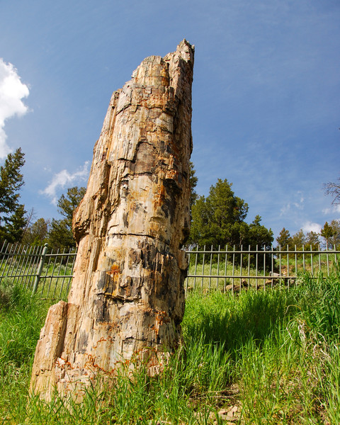 There's the petrified tree!