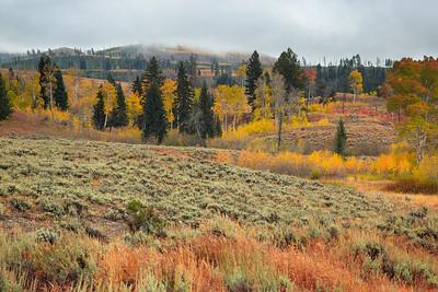 Fields of Sagebrush