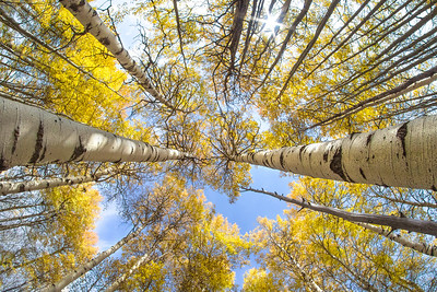 Fisheye Fun in the Aspens