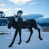 Moose Sculpture at National Museum of Wildlife Art