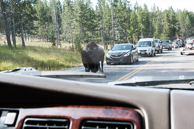 Yellowstone - Buffalo traffic jam