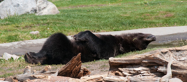 West Yellowstone, MT - Grizzly and Wolf Discovery Center - Break time!