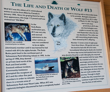 West Yellowstone, MT - Grizzly and Wolf Discovery Center - interesting stories