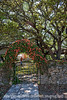 Trumpet Vine Arch and Old Live Oaks