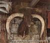 YO Ranch Longhorn